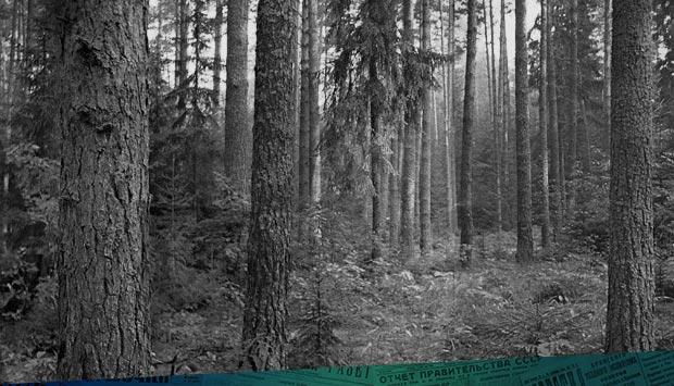 Быть ли природному парку «Брянский лес»