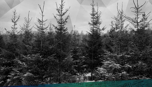 В лесу родилась ёлочка // Брянский рабочий. – 1966. – 28 дек. (№303). С. 4.: экскурсия в Брянский лес за ёлкой или как 53 года назад дятьковские лесники готовились к Новому году
