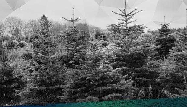 Новогодние ёлки: продажа начинается сегодня // Брянский рабочий. - 1938. – 15 дек. (№286). С. 4: где можно было купить ёлку в Брянске 81 год назад и сколько пушистых красавиц заготавливали для продажи горожанам