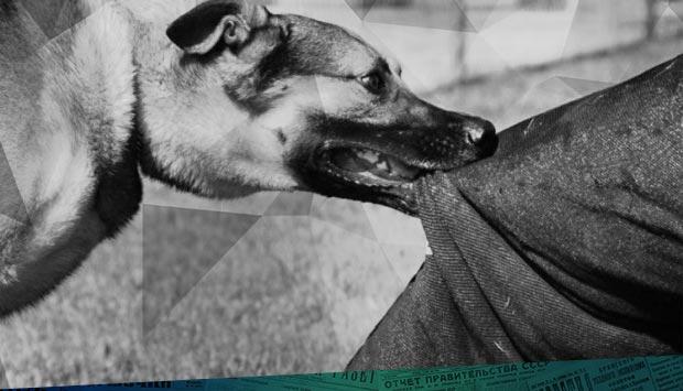 11 мая, часов около 12-ти // Орловский вестник. – 1900. – 28 мая (15 мая) (№127): о бродячих собаках, продаже мануфактурного товара и собрании благотворительного общества в Брянске 120 лет назад